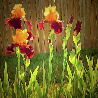 Digital Art - Two Tone Bearded Iris by Leslie Montgomery