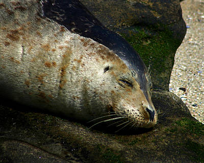 Photograph - Two Tone Seal by Anthony Jones