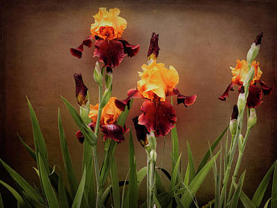 Photograph - Two Toned Bearded Iris by Leslie Montgomery