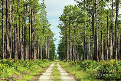 Southern Uplands Wall Art - Photograph - Two Track Through A Refuge by Maili Page