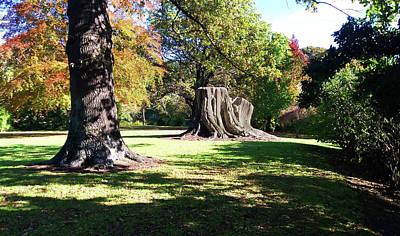 Photograph - Two Tree Trunks by Nareeta Martin
