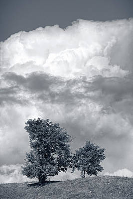 Two Trees #9249 Art Print