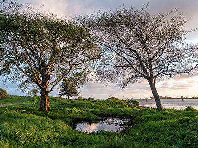 Photograph - Two Trees And A Puddle by Greg Nyquist