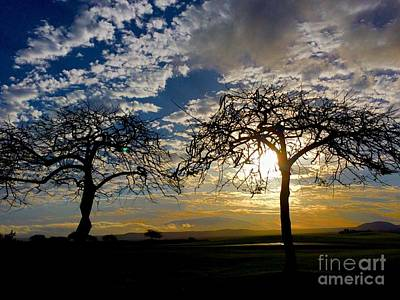 Photograph - Two Trees by Bette Phelan