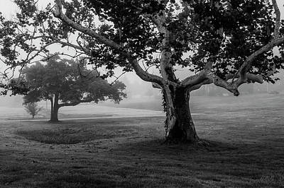 Two Trees Colt State Park Art Print