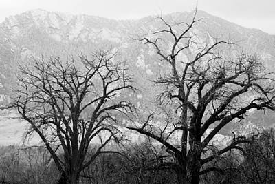 Photograph - Two Trees Flatirons Boulder Colorado by James BO Insogna