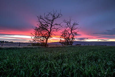 Two Trees In A Purple Sunset Art Print by Brad Stinson