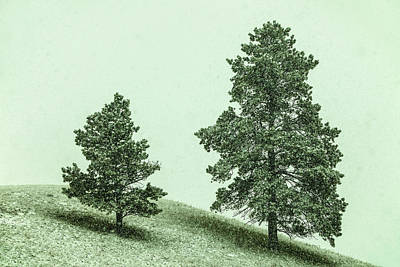 Snow Falling Photograph - Two Trees In The Snow by Todd Klassy