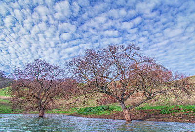 Photograph - Two Trees In Water And Clouds by Marc Crumpler
