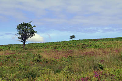 Photograph - Two Trees On Dunkery Hill by Tony Murtagh