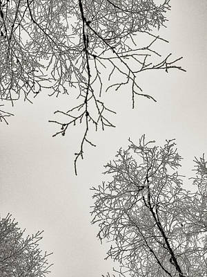 Photograph - Two Trees Reaching Towards Each Other by Ismo Raisanen