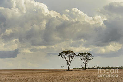 Photograph - Two Trees by Werner Padarin