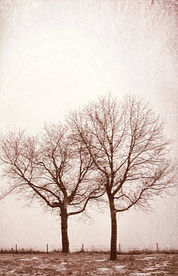 Photograph - Two Trees#1 by Susan Crossman Buscho