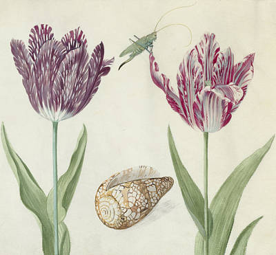 Grasshopper Painting - Two Tulips A Shell And A Grasshopper by Jacob Marrel