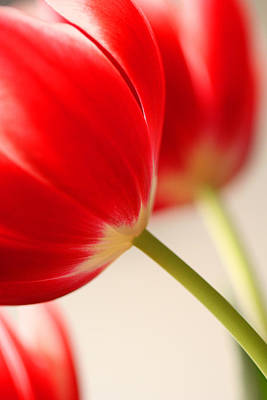 Wall Art - Photograph - Two Tulips by Mary McGrath