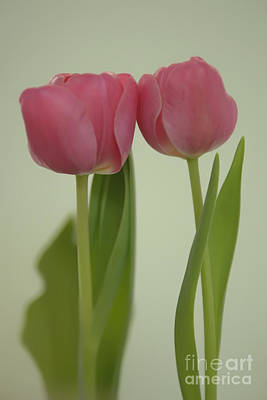 Photograph - Two Tulips by Olga Hamilton