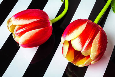 Two Tulips On Striped Plate Art Print by Garry Gay