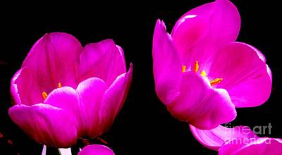 Photograph - Two Tulips by Tim Townsend