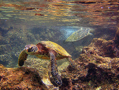 Hawaiian Green Sea Turtle Photograph - Two Turtles by Bette Phelan