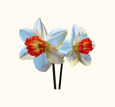 Photograph - Two White And Orange Daffodils by Susan Savad