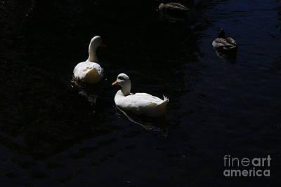 Photograph - Two White Ducks by Nareeta Martin