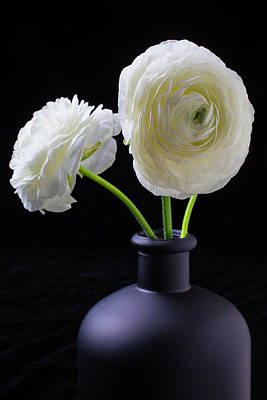 Ranunculus Wall Art - Photograph - Two White Ranunculus by Garry Gay