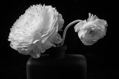 White Ranunculus Flower Photograph - Two White Ranunculus In Black Vase by Garry Gay