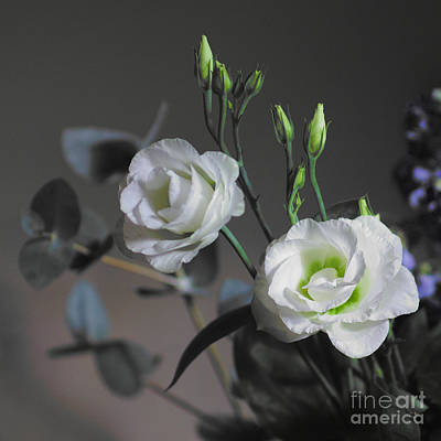 Photograph - Two White Roses by Jeremy Hayden
