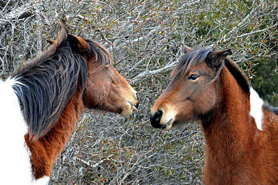 Photograph - Two Wild Ponies Of Assateague Island National Seashore by Bill Swartwout