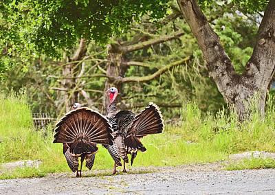 Photograph - Two Wild Tom Turkeys by Joyce Dickens