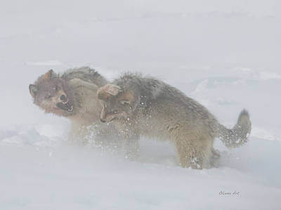 Digital Art - Two Wolves Fighting 24x18  by OLena Art Brand