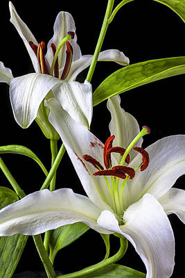 Two Wonderful Lilies  Art Print by Garry Gay