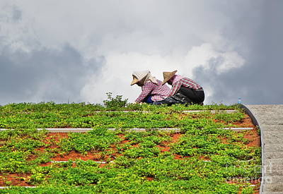 Photograph - Two Workers Busy With Landscaping by Yali Shi