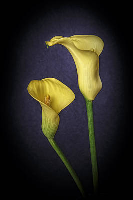 Photograph - Two Yellow Calla Lilies by Wes and Dotty Weber