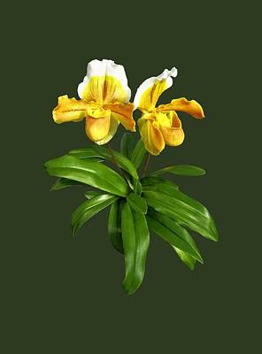Photograph - Two Yellow Lady Slipper Orchids by Susan Savad