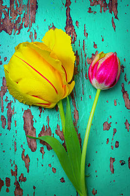 Two Yellow Red Tulips Art Print by Garry Gay