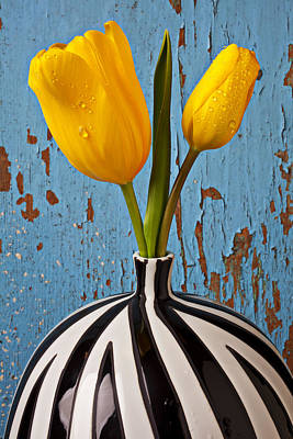 Blue Color Photograph - Two Yellow Tulips by Garry Gay