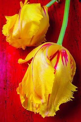 Exotic Soft Photograph - Two Yellow Tulips On Red Table by Garry Gay