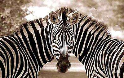 Digital Art - Two Zebras - One Head - Conjoined Twins by Merton Allen