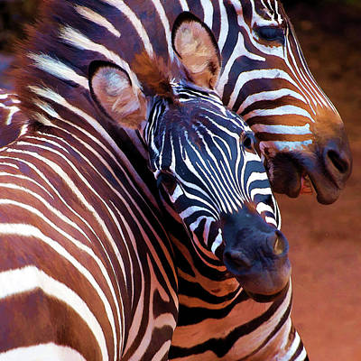 Digital Art - Two Zebras Playing With Each Other by Lena  Owens OLena Art