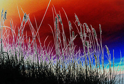 Photograph - Tybee Island Grasses 2 by Elyza Rodriguez