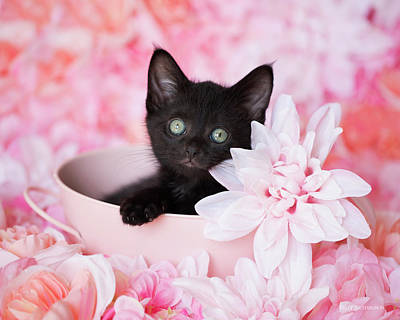 Photograph - Tye Pink Floral H by Kelly Richardson