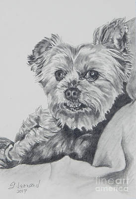 Yorkie Drawing - Tyler Reed by Suzanne Leonard
