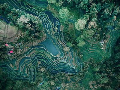 Ubud Rice Terrace Art Print