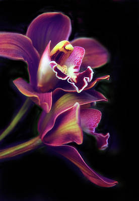 Photograph - The Painted Orchid by Jessica Jenney