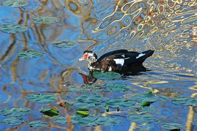 Photograph - Ugly Duckling by Robert Anschutz