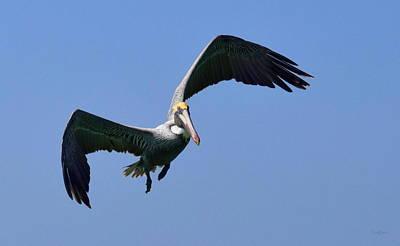 Photograph - Ultimate Angry Bird by Deborah  Crew-Johnson