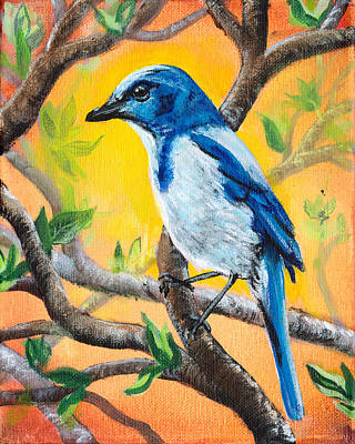 Ultramarine Flycatcher Bird By Gretchen Smith Original by Gretchen  Smith