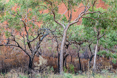 Photograph - Uluru 05 by Werner Padarin