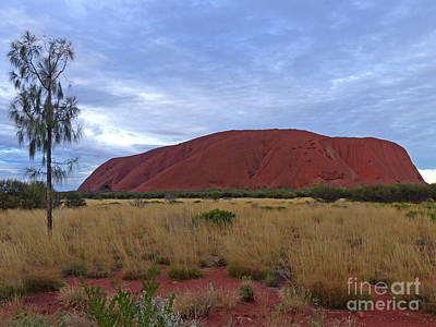 Photograph - Uluru - Evening Light by Phil Banks